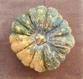 Close-up of pumpkin - PhotoDune Item for Sale