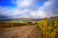 Vineyards - PhotoDune Item for Sale