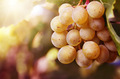 White grapes - PhotoDune Item for Sale