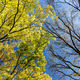 Beautiful autumn trees in forest - PhotoDune Item for Sale