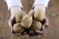 dirty potatoes are held in hands - PhotoDune Item for Sale