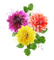 Watercolor Image Of  Dahlia Flowers - PhotoDune Item for Sale
