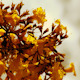 Yellow and Orange Poui Flowers 07 - VideoHive Item for Sale