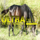 Horse on Green Meadow 3 - VideoHive Item for Sale