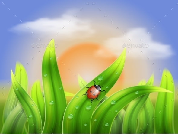 GraphicRiver Ladybug and Grass on a Background Sunset 9242314