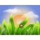 Ladybug and Grass on a Background Sunset - GraphicRiver Item for Sale