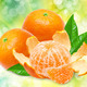 Mandarins on bright, green background - PhotoDune Item for Sale