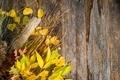 Autumn Bouquet Background - PhotoDune Item for Sale
