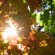 Autumn Leaves and Sun  - VideoHive Item for Sale