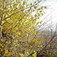 Autumn Dry Bush - VideoHive Item for Sale