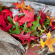 Autumn Leaves on Driftwood - PhotoDune Item for Sale