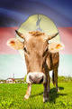Cow with flag on background series - New Caledonia - PhotoDune Item for Sale
