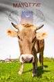 Cow with flag on background series - Mayotte - PhotoDune Item for Sale