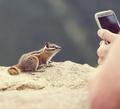 Chipmunk - PhotoDune Item for Sale