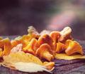 Mushroom - PhotoDune Item for Sale