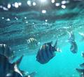 Coral fish - PhotoDune Item for Sale