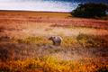 Bear - PhotoDune Item for Sale