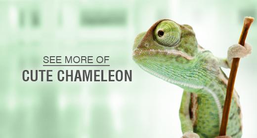 Model Chameleon