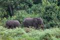 forest elephants in Kenya - PhotoDune Item for Sale