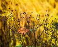 anemone flower - PhotoDune Item for Sale