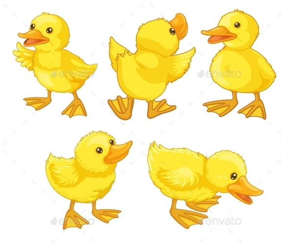 GraphicRiver Duckling Chicks 9259912
