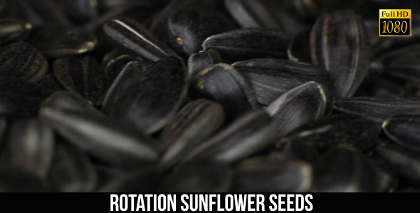 Rotation Sunflower Seeds 2