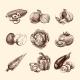 Vegetables Sketch Set - GraphicRiver Item for Sale