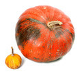 Big and small pumpkins - PhotoDune Item for Sale