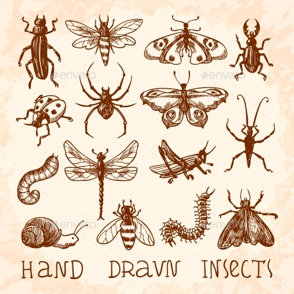 GraphicRiver Insects Sketch Set 9264582