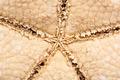 Sea Star - PhotoDune Item for Sale