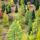 Autumn colors in Dolomites, Italy - PhotoDune Item for Sale