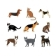 Cats and dogs vector illustration - GraphicRiver Item for Sale