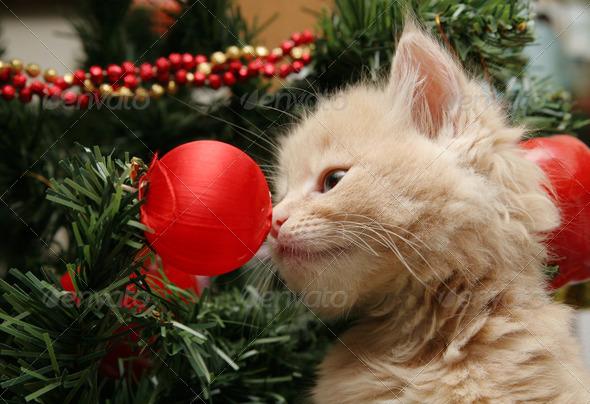 Kitten sniffing Christmas ornament