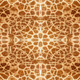 Giraffe skin pattern - PhotoDune Item for Sale