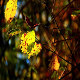 Yellow Leaves of Autumn - VideoHive Item for Sale
