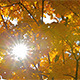 Yellow Autumn Leaves and Big Sunny Star - VideoHive Item for Sale