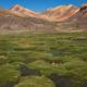 Wetland in the Atacama - PhotoDune Item for Sale