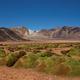 Cushion Plants in the Atacama - PhotoDune Item for Sale