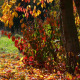 Autumn Leaf Fall - VideoHive Item for Sale
