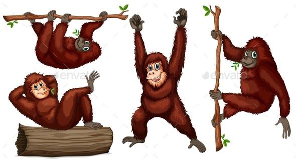 GraphicRiver Orangutans 9278089
