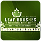 Leaf - Photoshop Brushes - GraphicRiver Item for Sale