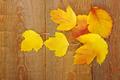 autumn background - PhotoDune Item for Sale