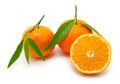 mandarin on white - PhotoDune Item for Sale