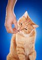 Cat's Treat - PhotoDune Item for Sale