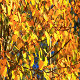 Golden Forest - VideoHive Item for Sale
