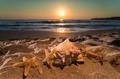 Sunrise on the beach. Shells - PhotoDune Item for Sale