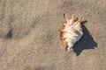 Shells on the beach - PhotoDune Item for Sale