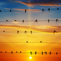 flock of birds on a background of sunrise - PhotoDune Item for Sale