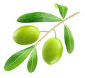 Green olives - PhotoDune Item for Sale