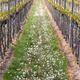 Vineyard in Pfalz, Germany - PhotoDune Item for Sale